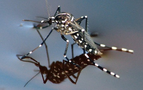 West Nile found in Redwood City