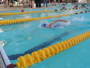 Carlmont swimmers dominate over Terra Nova Tigers