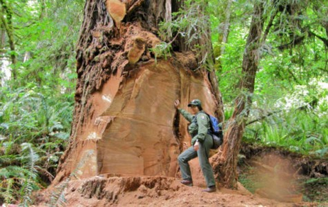 Men charged for Redwood poaching
