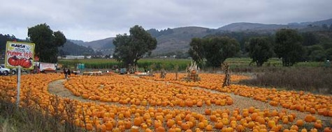 Half Moon Bay: pumpkin world in our backyard