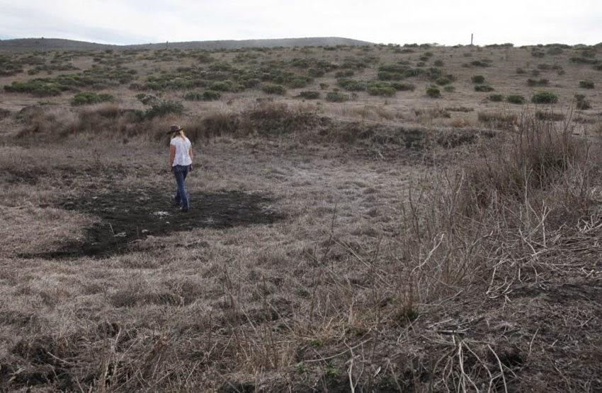 The+drought+has+hit+Half+Moon+Bay+farms+hard