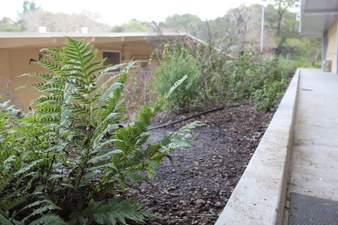 Ferns are planted around the outside of the building, along with other evergreen vegetation as part of landscaping.