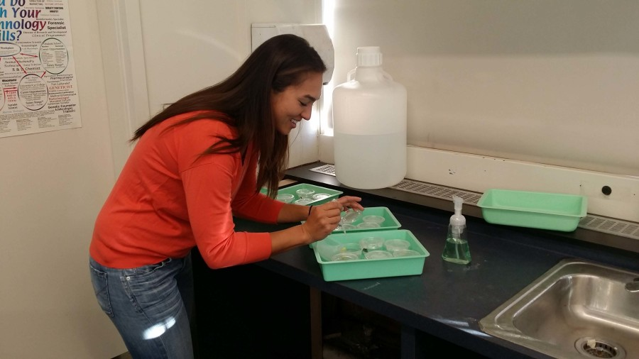 Alumni+Stephanie+Weden+cleans+up+Biology+materials+at+the+end+of+her+first+period+class.+