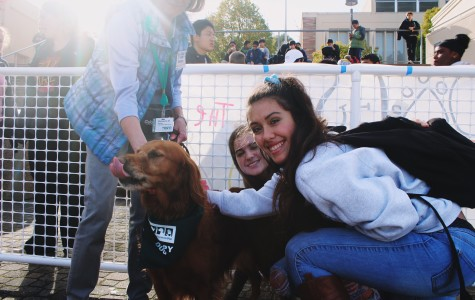 Therapy dogs brighten students' days