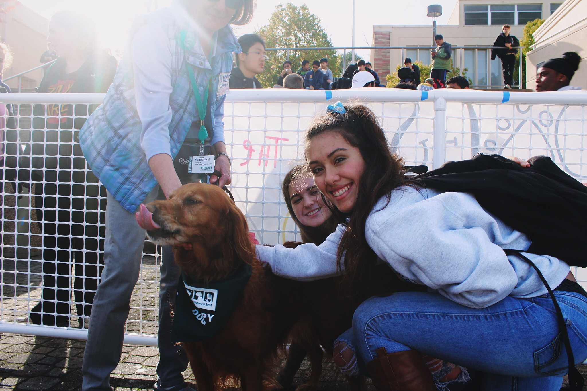 Juniors Maya Paulo and Casey Costello gather around therapy dog Mariana.
