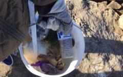 Ocean Club harbors Carlmont's ocean lovers