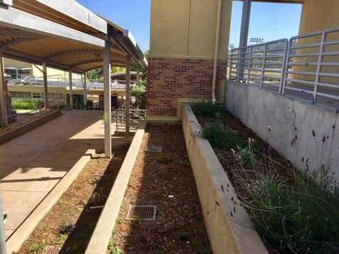 Environmental Club proposes community garden