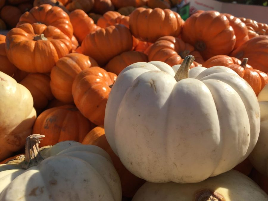 The+annual+Half+Moon+Bay+Art+%26+Pumpkin+Festival+celebrates+with+a+huge+assortment+of+pumpkins%2C+festivities%2C+and+more.+The+event+attracts+many+who+embrace+all+things+pumpkin%2C+including+carving%2C+cuisine%2C+and+activities.