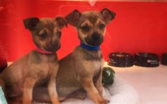 Hundreds of puppies and kittens look for a home this holiday season