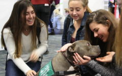 Dogs relieve stress before final exams