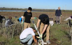 Save the Bay welcomes migratory birds