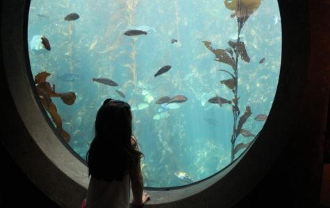 Monterey Bay Aquarium's Viva Baja exhibit connects kids to the world around them