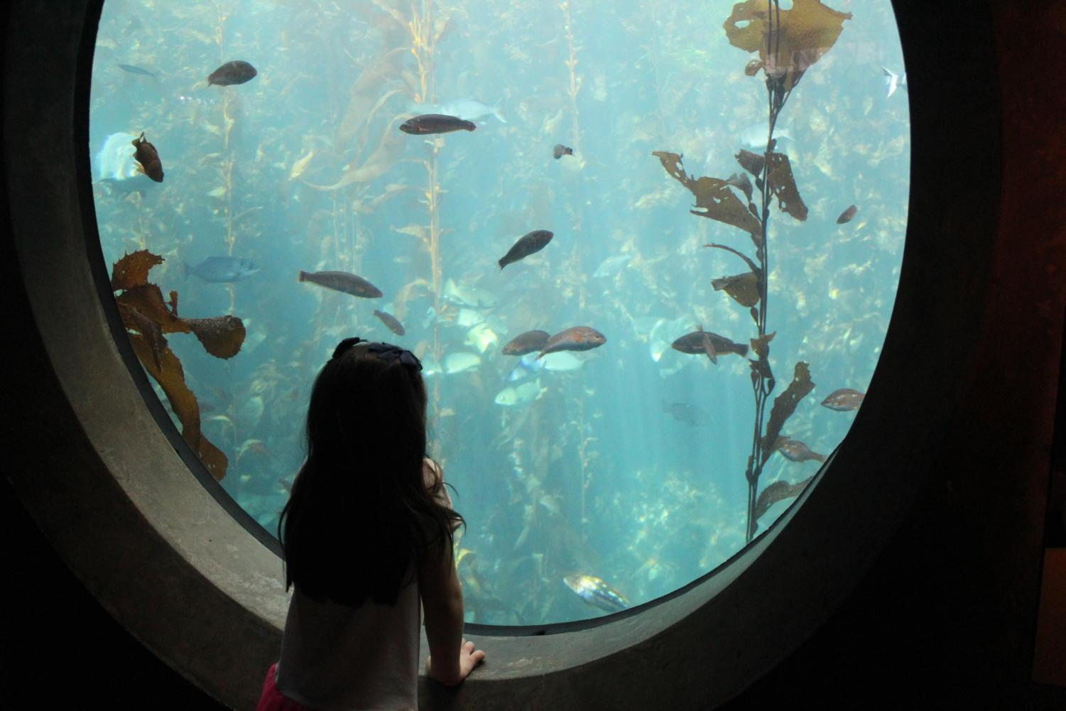 The Aquarium's concave observation windows allow kids to get close to the marine life.