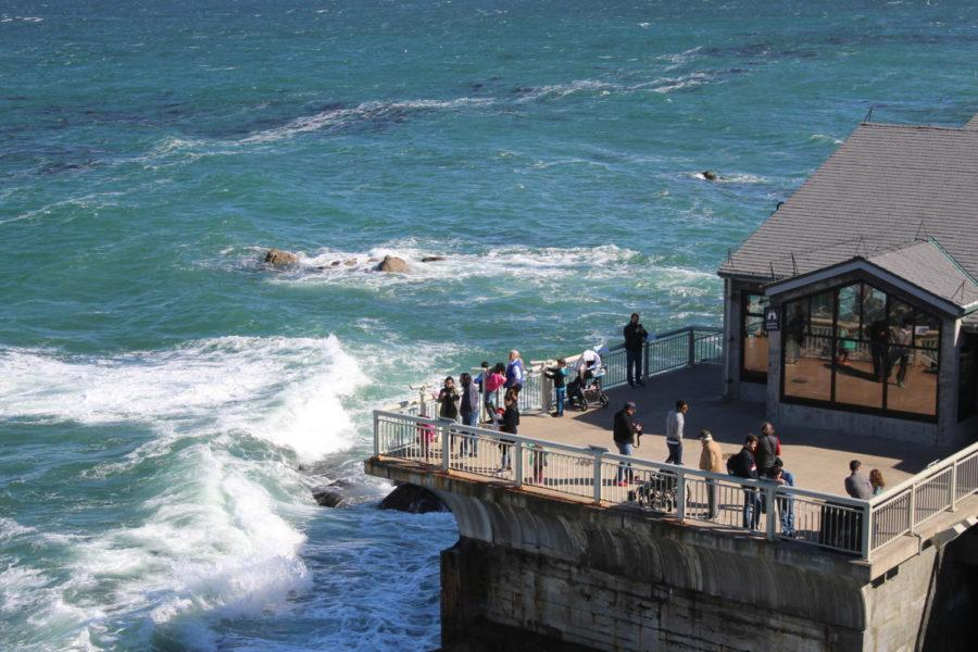 The+Aquarium+is+located+on+the+edge+of+the+Monterey+Bay%2C+allowing+visitors+to+see+animals+like+otters+in+their+natural+habitats.