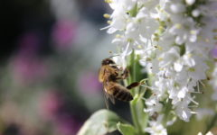 Save the Bees Day creates a buzz around campus