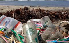 Bay Area restaurants move toward eco-friendly status
