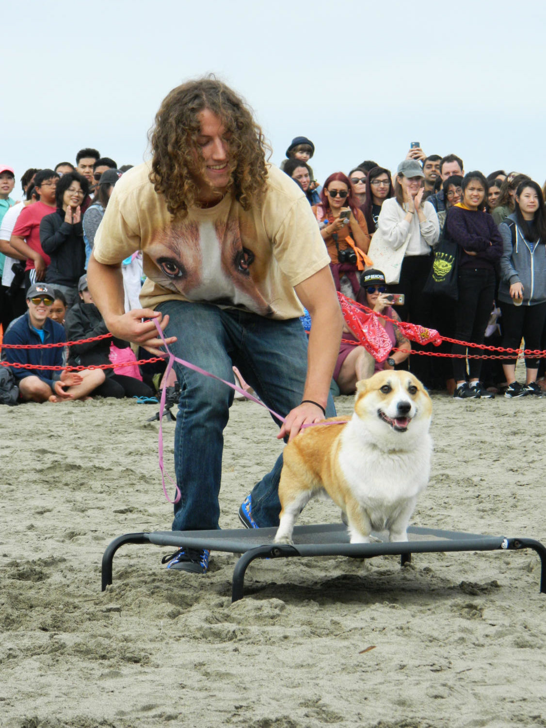 A+corgi+sits+on+a+trampoline++completing+the+course+with+the+help+of+their+owner.+