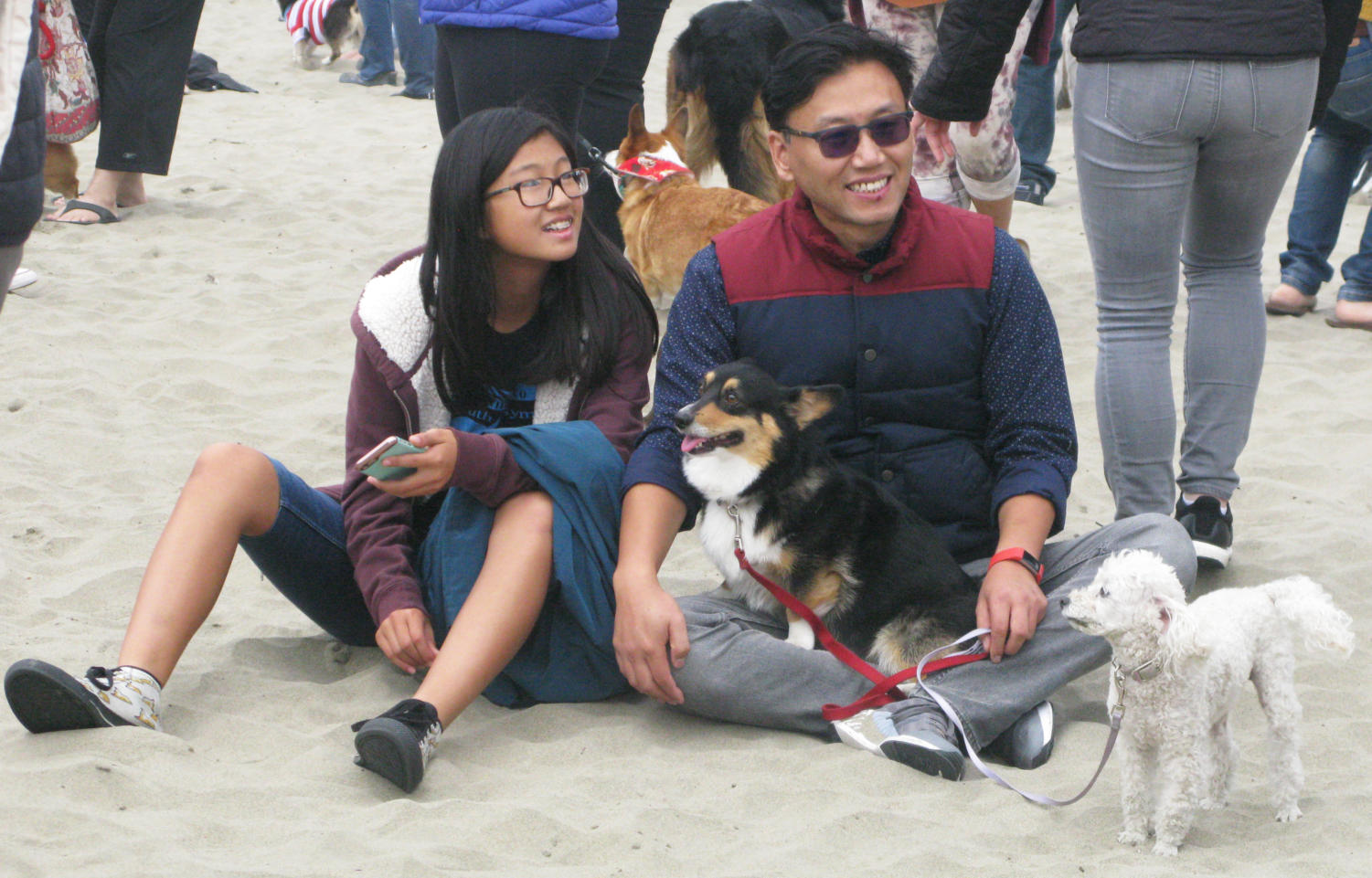 A+father+and+daughter+watch+a+corgi+sprinting+through+a+crowd+with+the+company+of+their+two+dogs.