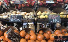 Trader Joe's welcomes the Halloween season with affordable pumpkins