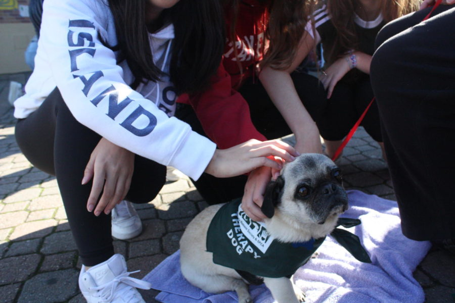 Students+gather+around+to+pet+Wilbur%2C+a+pug.+