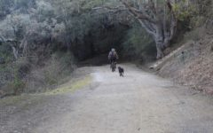 New regulations encourage dog walking