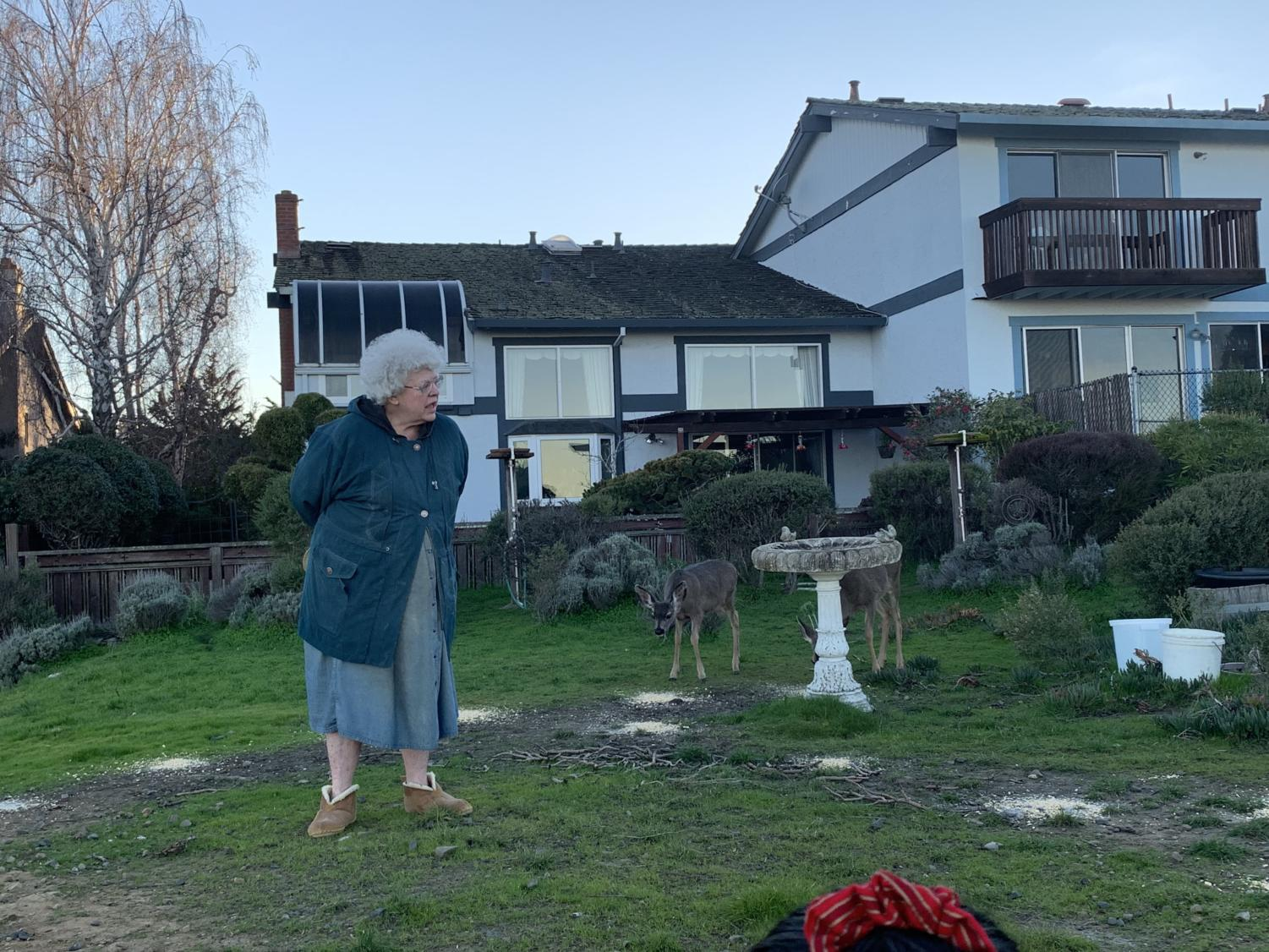 Sandy Hutchinson stands before some of the many local deer living in Belmont.