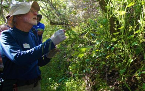 Wildflower Walk provides a relaxing and informative hike