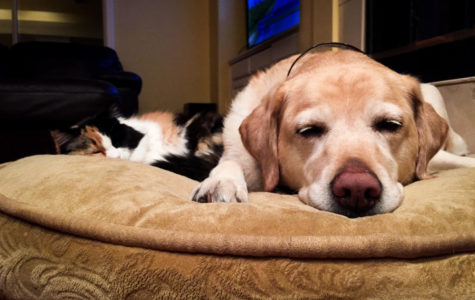 Opinion: Cats and dogs are both great pets