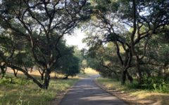 Summer brings hiking opportunities near the Stanford Dish