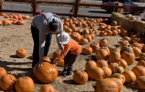 Webb Ranch Pumpkin Patch kicks off the Halloween season