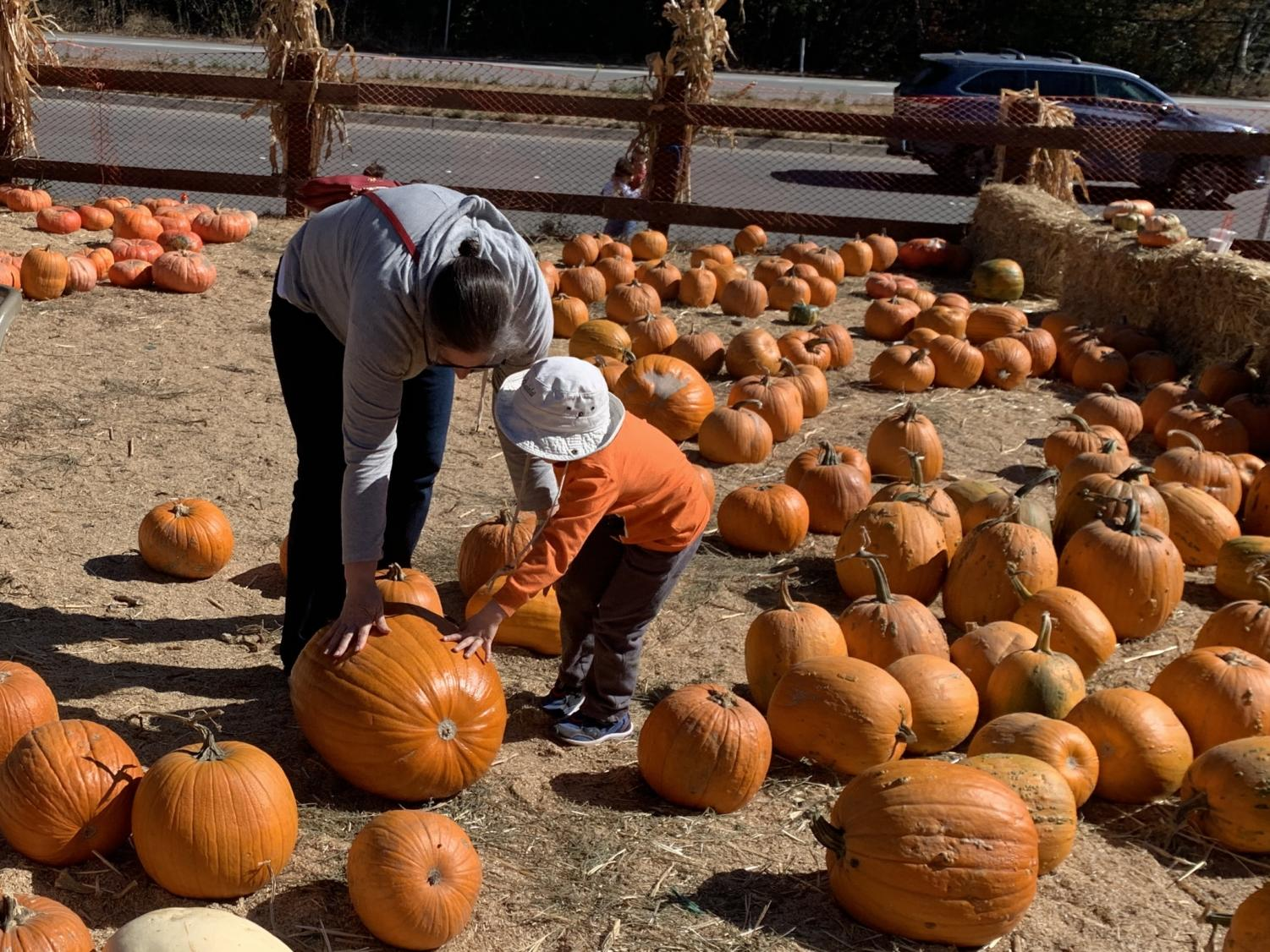 Mother and her son pick pumpkins together from the field.
