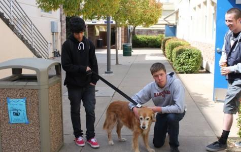 Lost dog, Hudson, found on campus