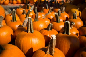 Picking the perfect pumpkin is an important aspect of the Halloween holiday for students