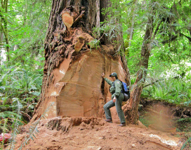 Two men were charged for Redwood poaching this Wednesday at the Redwood National Park.