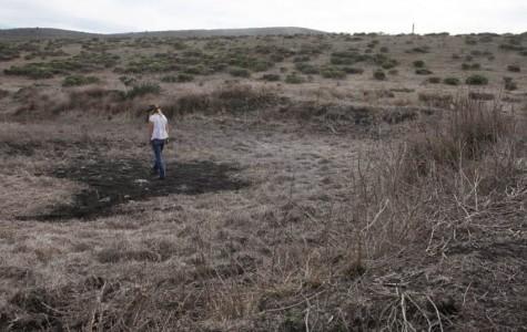The drought has hit Half Moon Bay farms hard