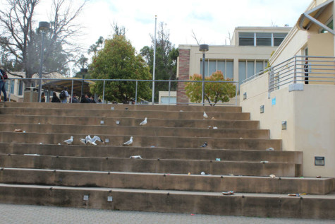 """The mess we [Carlmont students] leave after lunch is really gross. I think that if we reduced our trash we would also get rid of our bird problem,"" said sophomore Sydney Adair."