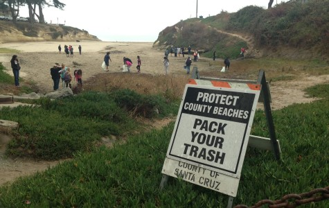 At Sunny Cove Beach, friends and families take responsibility for their environment by collecting trash near their local beach.