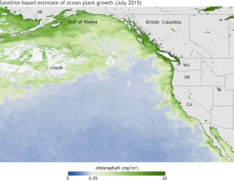 The satellite-based picture represents the chlorophyll concentrations in July 2015. The darker the green, the higher the concentration. The high concentrations of chlorophyll represent the large amounts of algal blooms.