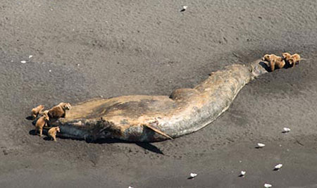 Dead whales point to a bigger problem