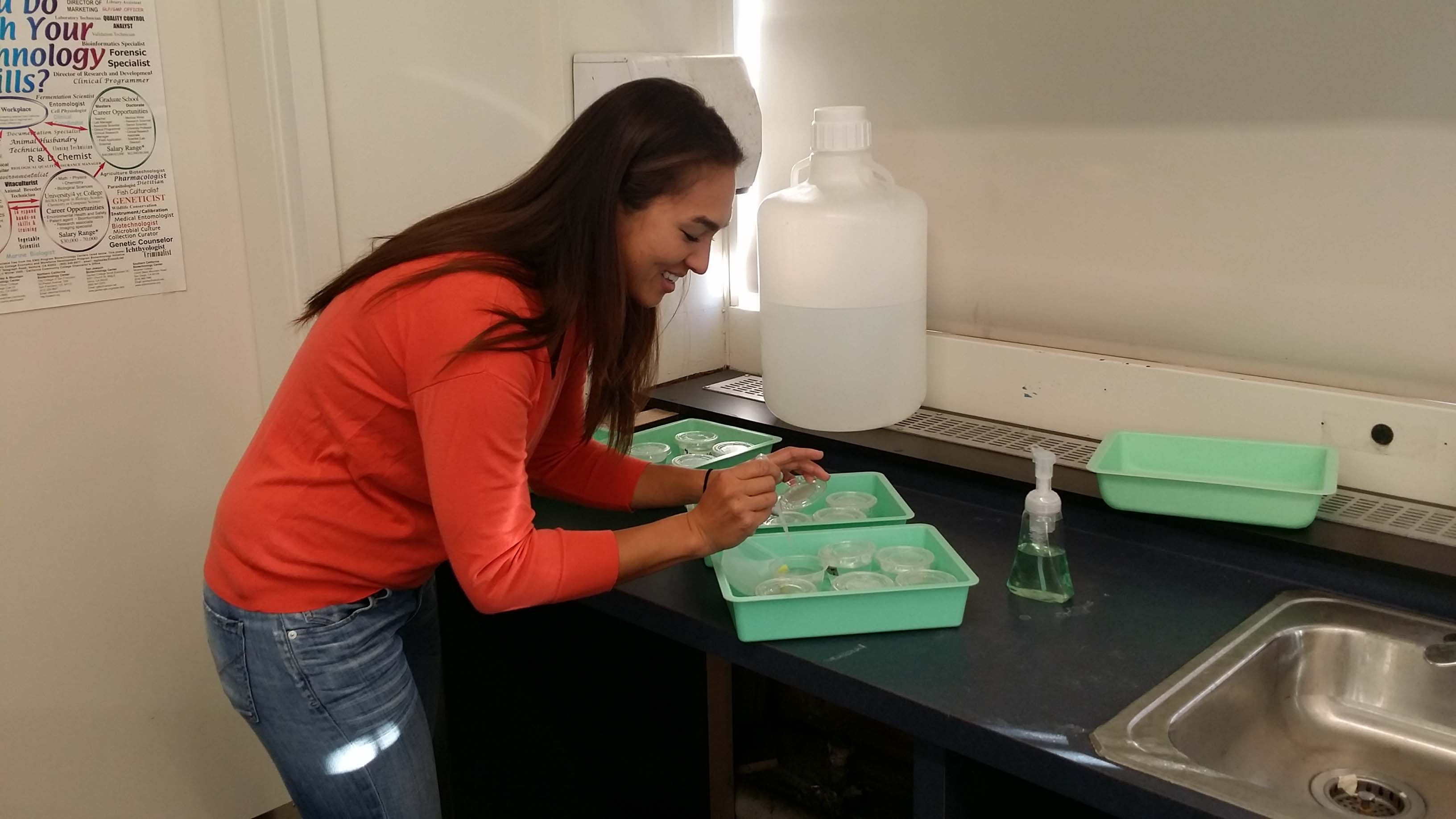 Alumni Stephanie Weden cleans up Biology materials at the end of her first period class.