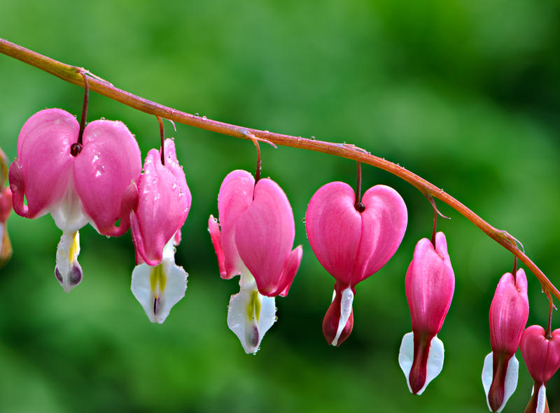Like Bleeding Heart flowers, sexual and romantic orientations and attractions branch out in different ways.