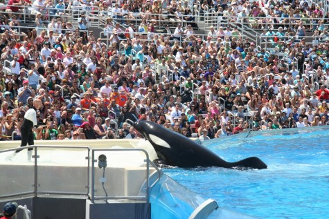 SeaWorld's cancellation of orca breeding program makes history