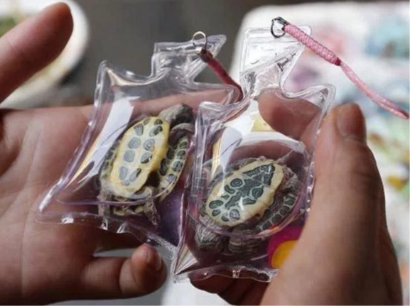At the Beijing Olympic Games a man was selling live turtles, fish, and lizards in plastic bags as souvenirs. This shows just one example of the unspeakable crimes that are committed against small animals whose lives are often considered less precious than those of bigger animals.