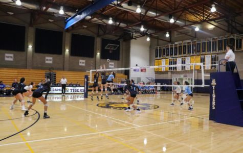 Varsity volleyball defeats the Tigers at the 'Battle of Belmont'