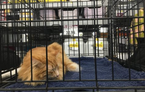 Adoption fair helps local cats find homes