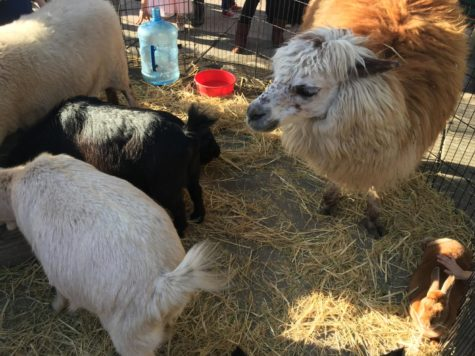 San Carlos petting zoo invites families to bond