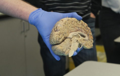 Neil Schwartz holds out a brain for students to see.
