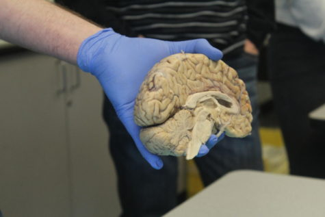 AP Psychology students inspect human brains