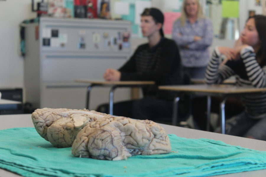 Brain+lies+on+the+table+as+students+watch+the+presentation.+