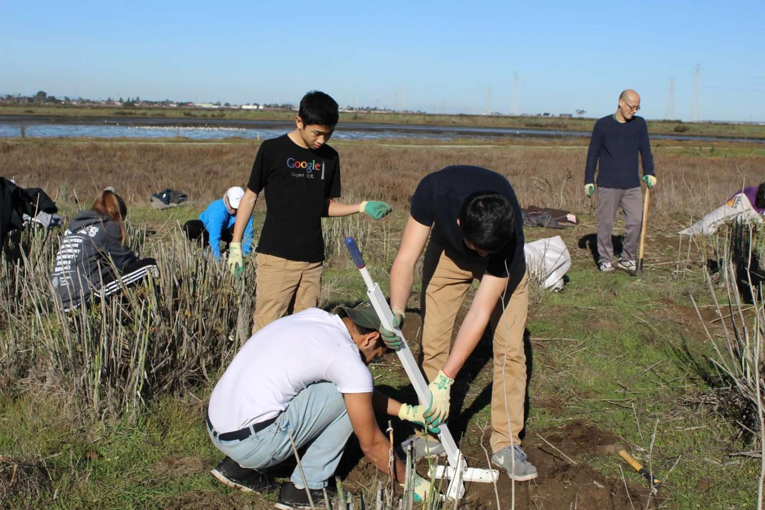 Devansh Tandon, a senior, and Sam Fields, a senior, remove a fennel plant through the use of a weed wrench.